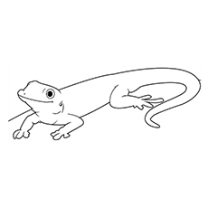 lizard coloring page # 1