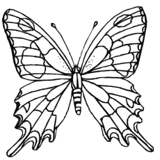 butterfly coloring pages for adults # 22