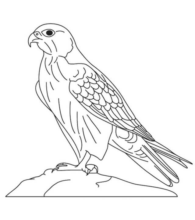 15 Printable Falcon Coloring Pages For Toddlers