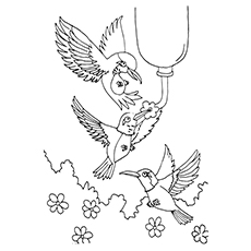 Top 10 Hummingbird Coloring Pages For Your Toddler