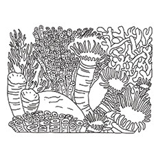 coral coloring pages # 23