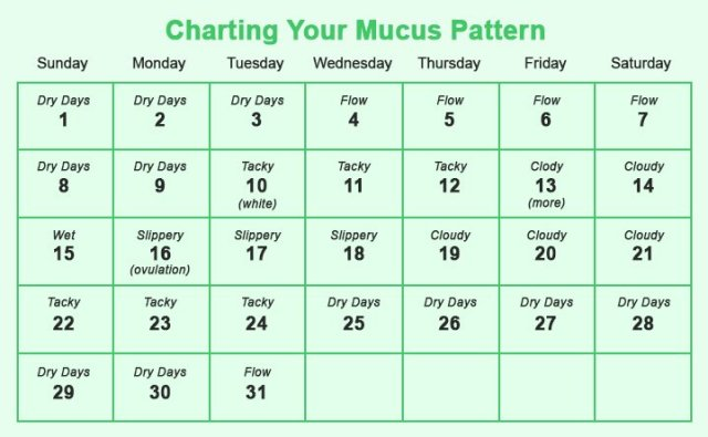 Chart The Mucus Pattern