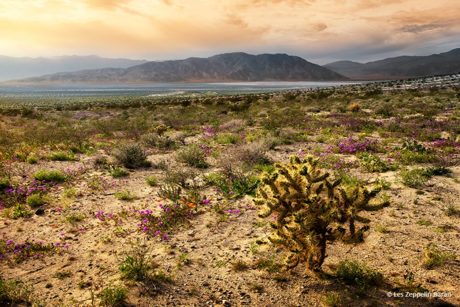 "Today's Photo Of The Day is ""Silent Dreamer"" by Les Zeppelin Baran. Location: Anza Borrego Desert, California."