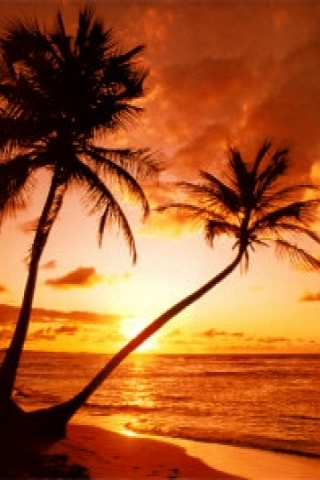 Keywords Palm Tree Sunset Iphone Wallpaper And Tags