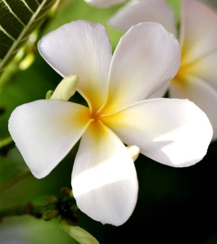 Top 25 Most Beautiful White Flowers 306 Top 25 Most Beautiful White Flowers 655909018
