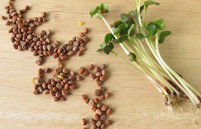 13.-Radish-Seeds-For-Vitiligo