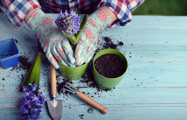 9. Grow Your Garden