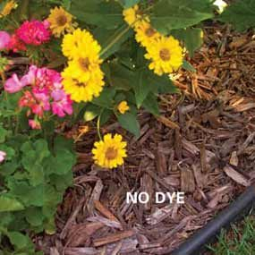 Everything You Need to Know About Mulch: Mulch Guide
