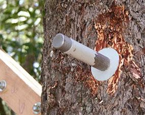 How To Build A Tree House Building Tips The Family