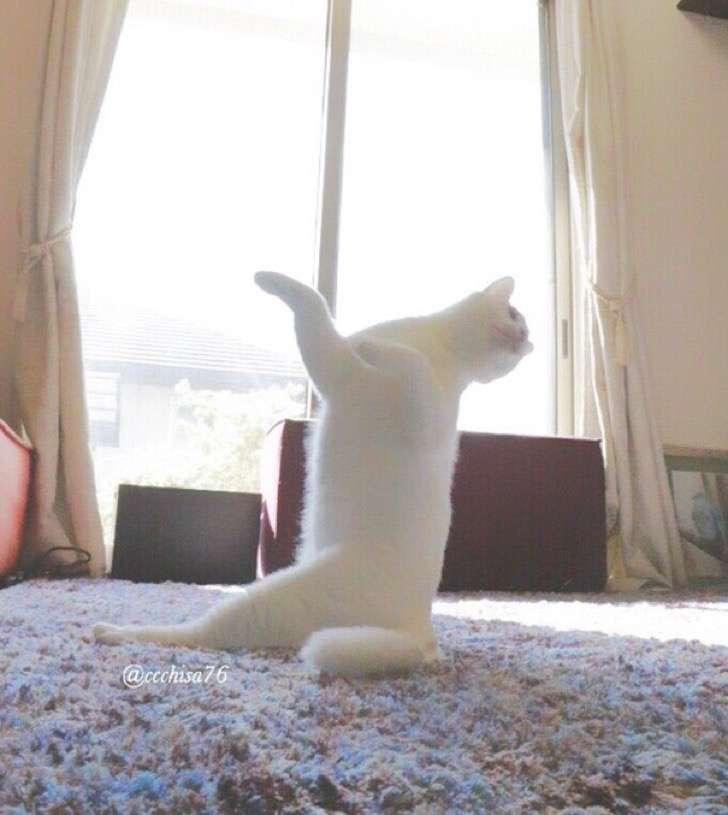 ballet-cat-japan-17 2