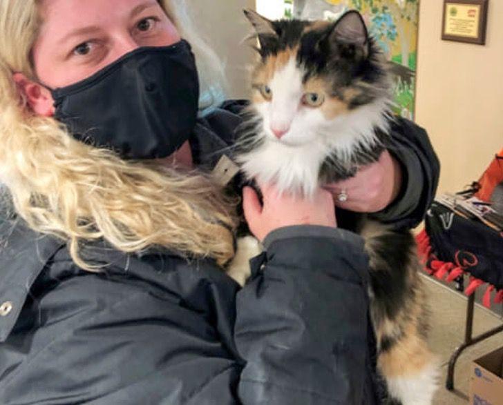 """Captura de Pantalla 2020 12 31 a las 12.22.30 - Gato volvió a casa para Navidad después de 5 años perdido en la calle: """"Parece un milagro"""""""