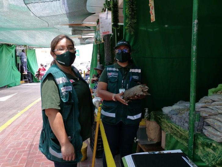 Captura de Pantalla 2020 12 31 a las 14.00.49 - En Perú rescataron a 22 tortugas y 6 iguanas del comercio ilegal. Responsable pagará una multa alta