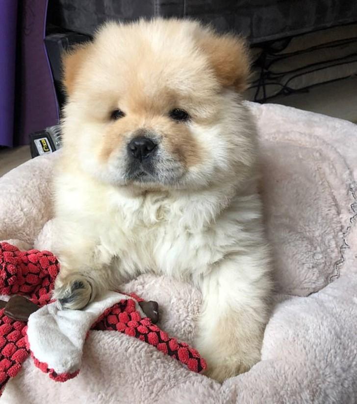gus 1 - Cachorro sufrió amputación de una pierna tras falta de cuidado de su criador. Hoy busca ser querido