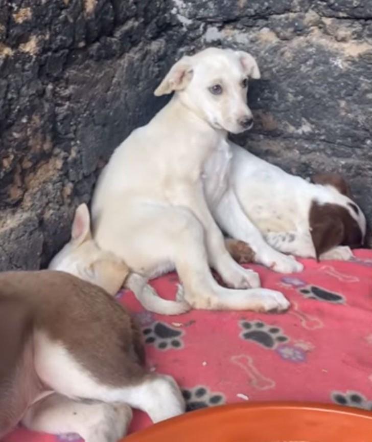 perro 2 1 - Cachorros rescatados lucen temerosos al llegar a su refugio. Su timidez es signo de sufrimiento