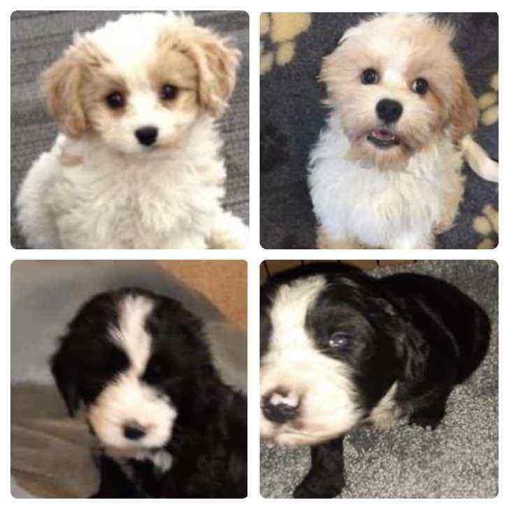 """139485353 1627391044116001 5613625640270789234 o - """"No son posesiones, son familia"""": Detectives recuperan unos 70 perros tras ola de robos en pandemia"""