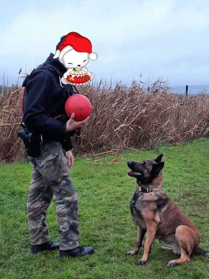 Captura de Pantalla 2021 01 18 a las 16.18.04 - Lo dejaron atado a un árbol y ahora se convirtió en un perro policía. Es un ejemplo de superación