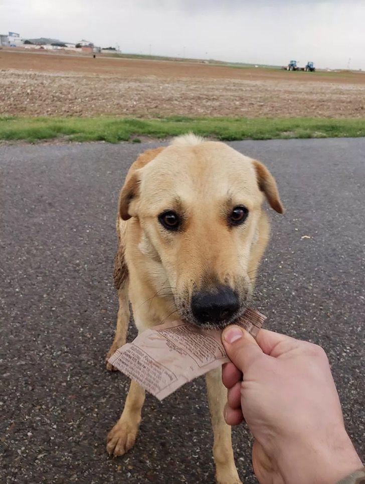 Captura de Pantalla 2021 01 19 a las 13.21.17 - Soldado rescató a perro callejero en Irak y lo llevó consigo a Estados Unidos. Fue su compañero