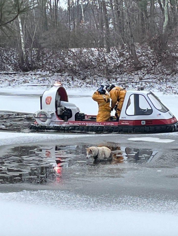 Captura de Pantalla 2021 01 27 a las 17.12.28 - Bomberos rescatan a perro que estaba inmóvil congelándose en un lago. Ya se había dado por vencido