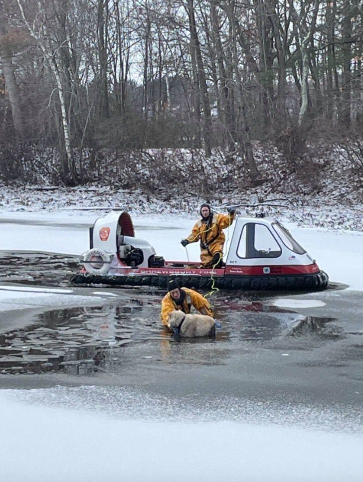 Captura de Pantalla 2021 01 27 a las 17.12.43 - Bomberos rescatan a perro que estaba inmóvil congelándose en un lago. Ya se había dado por vencido
