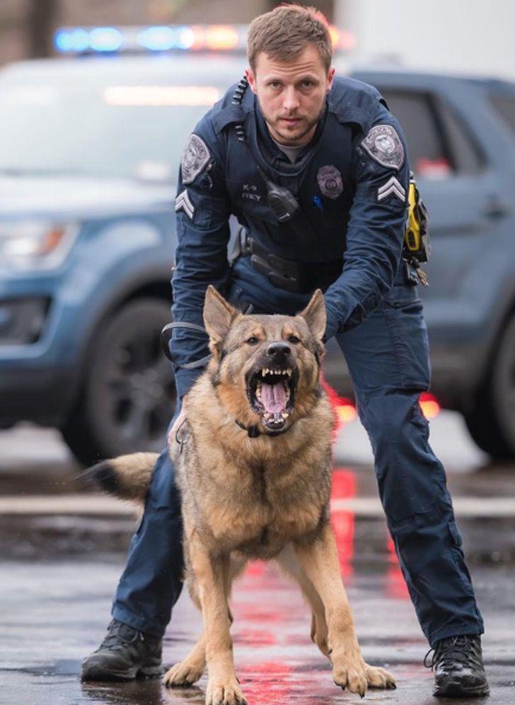 Captura de Pantalla 2021 01 28 a las 11.40.29 - Perro policía ama estar junto a la bebé de la familia. Es un guardián dentro y fuera de la casa