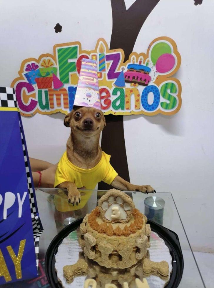 Captura de Pantalla 2021 02 22 a las 17.56.33 - Perrito no para de sonreír al recibir una fiesta sorpresa de cumpleaños. Fue a devorar el pastel