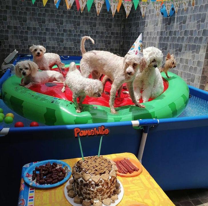 Captura de Pantalla 2021 03 03 a las 11.03.50 - Perrito celebró su cumpleaños en una piscina e invitó a sus amigos. No respetó el distanciamiento