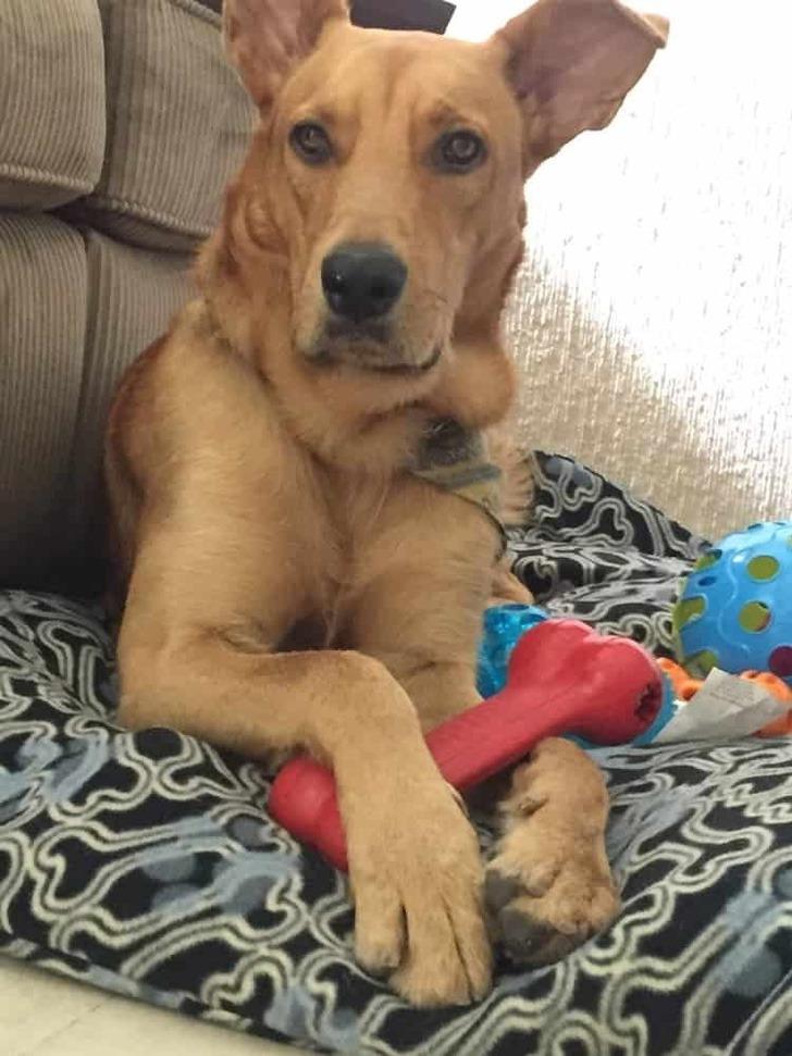 """perro adoptado calle0001 - """"No sustituye a un niño pero para nosotros es una alegría"""": Adoptaron a cachorro que les pidió ayuda"""