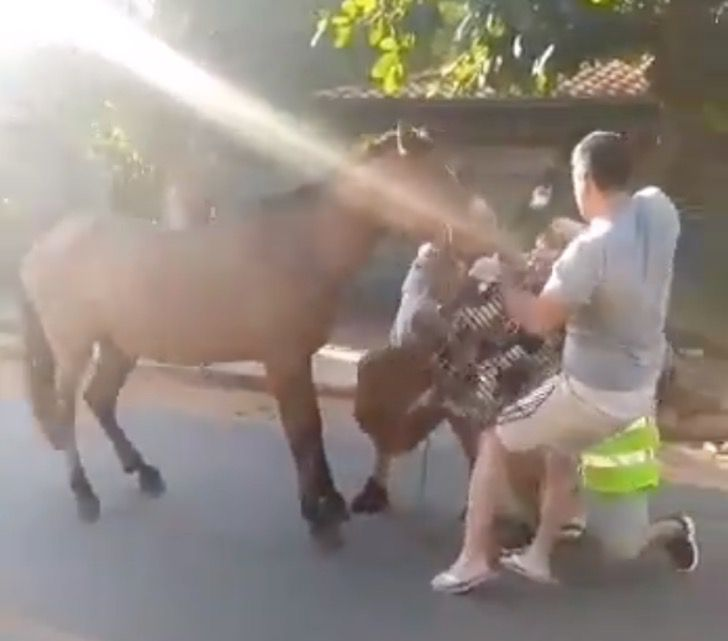 caballo atrapado sangrante boca hocico diente0002 - Caballo encadenado a un basurero lo arranca y arrastra con su hocico. Rompió su boca por libertad