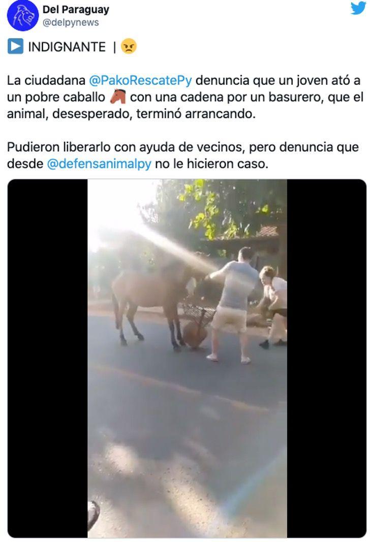 caballo atrapado sangrante boca hocico diente0008 - Caballo encadenado a un basurero lo arranca y arrastra con su hocico. Rompió su boca por libertad