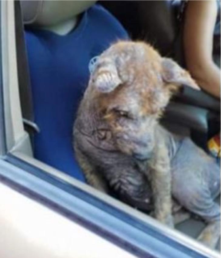 Captura de Pantalla 2021 07 05 a las 17.34.07 - Fue encontrado bajo un carro y en malas condiciones. Lo sanaron, adoptaron y dieron una nueva vida