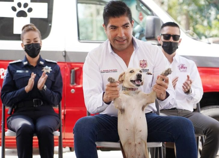 Captura de Pantalla 2021 08 27 a las 14.24.32 - Ciudad en México tendrá su ambulancia para traslado y rescate de animales. Ayudan a los callejeros