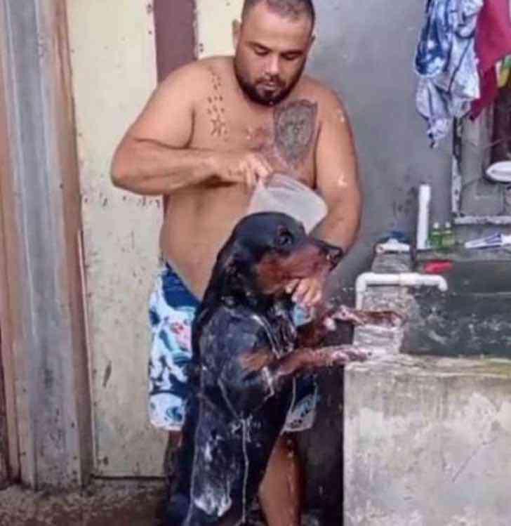 hombre bana a su perrito0000 - Obediente perrita se pone en dos patas para que su dueño la bañe. Espera tranquila a que él termine
