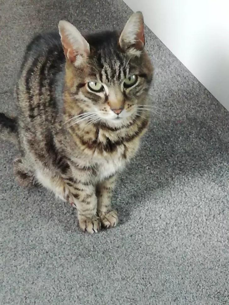 resize 29 1 - Gato atrapado en contenedor por 2 meses sobrevivió comiendo arañas y bebiendo gotas de condensación