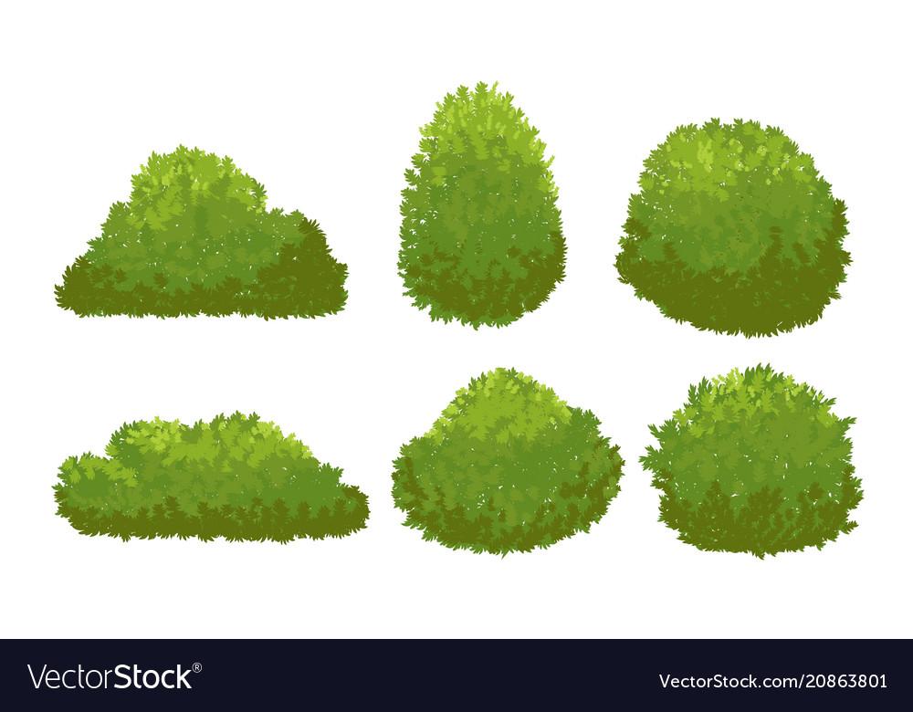 Garden Green Bushes Cartoon Shrub And Bush Vector Image
