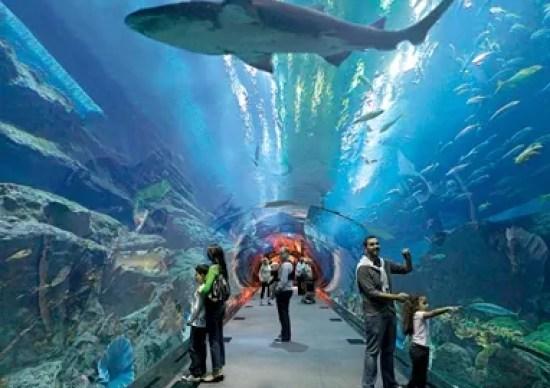 「ブルジュ・ドバイ 水族館」の画像検索結果