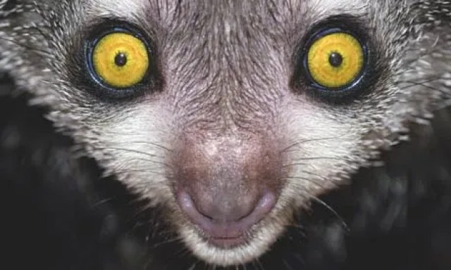 In search of Madagascar's aye-aye