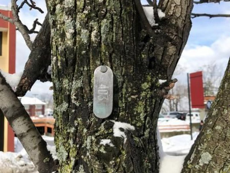 What Are Those Metal Tags On Waltham S Trees Waltham
