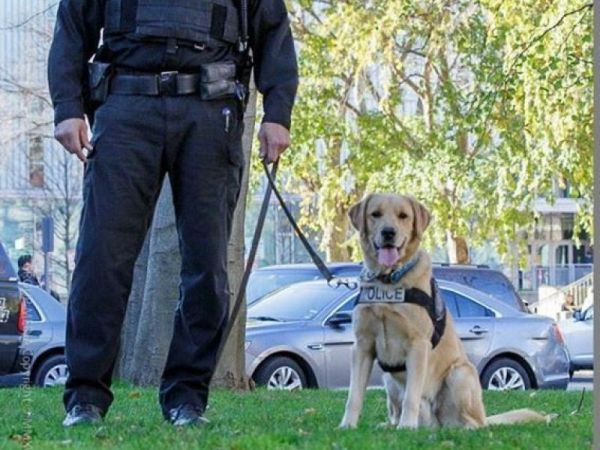 Cambridge Police Pups Celebrate Their Birthday - Cambridge ...