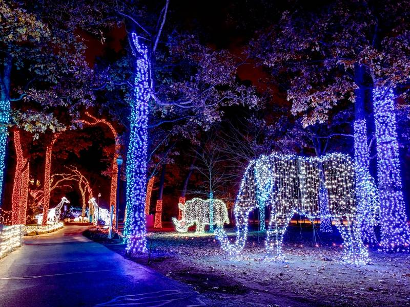 Zoo Light Tickets