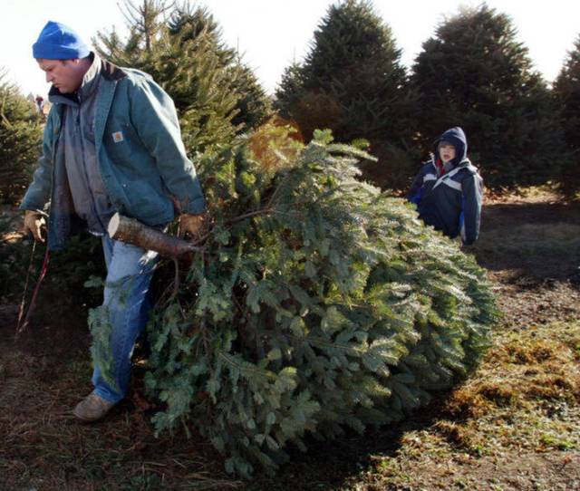 Where To Get Live Christmas Trees In Rockville Area