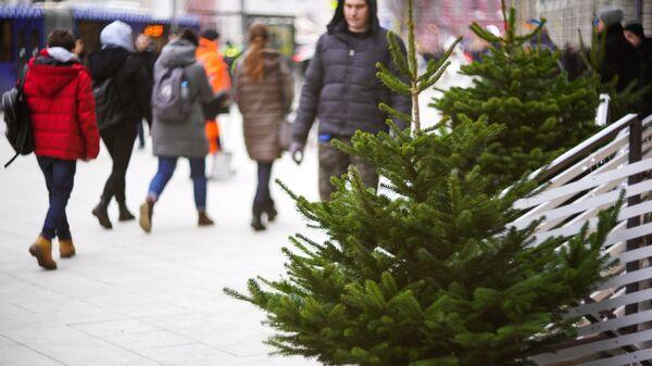 Елочный базар на Тверской улице в Москве. 20 декабря 2017