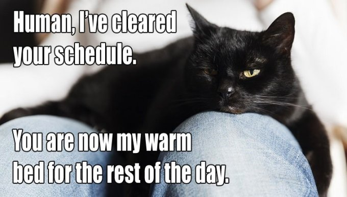 cat-owners-know