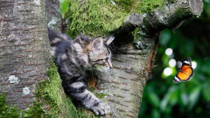 Cat in tree chasing butterfly