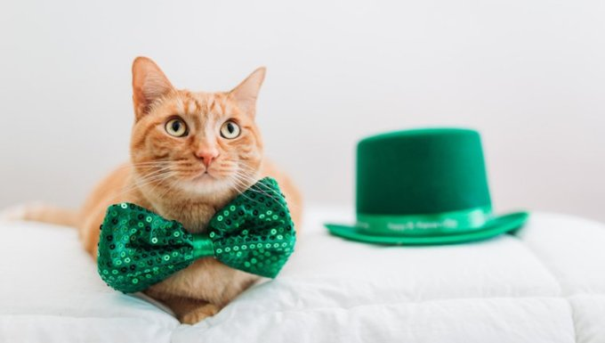 Cat with green bowtie