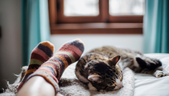 Cat and human in socks