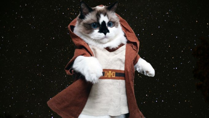 jedi cat in space on star wars day