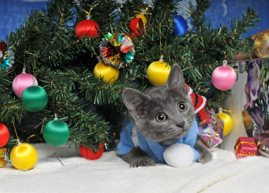 Cats Ready For Their Christmas Cards