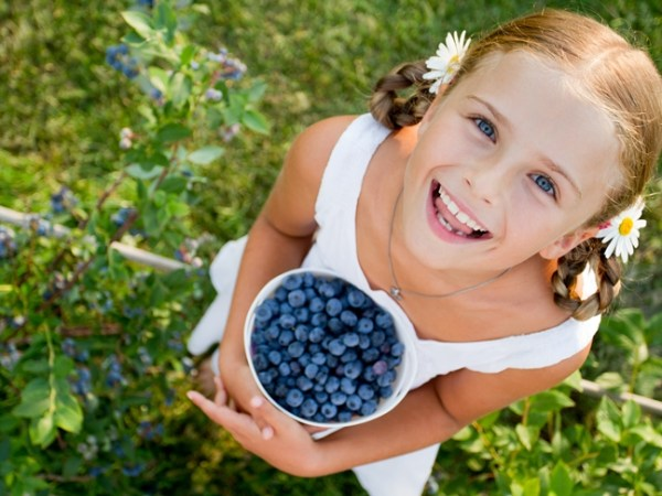Image result for berry picking