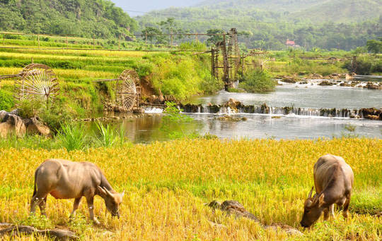 The unspoiled, rustic beauty of Pu Luong made visitors come here