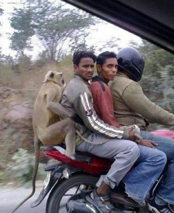 india_33
